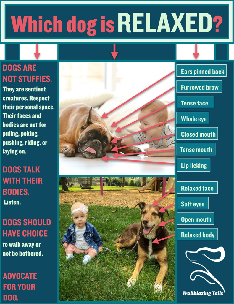 Child and Dog Interaction Guide
