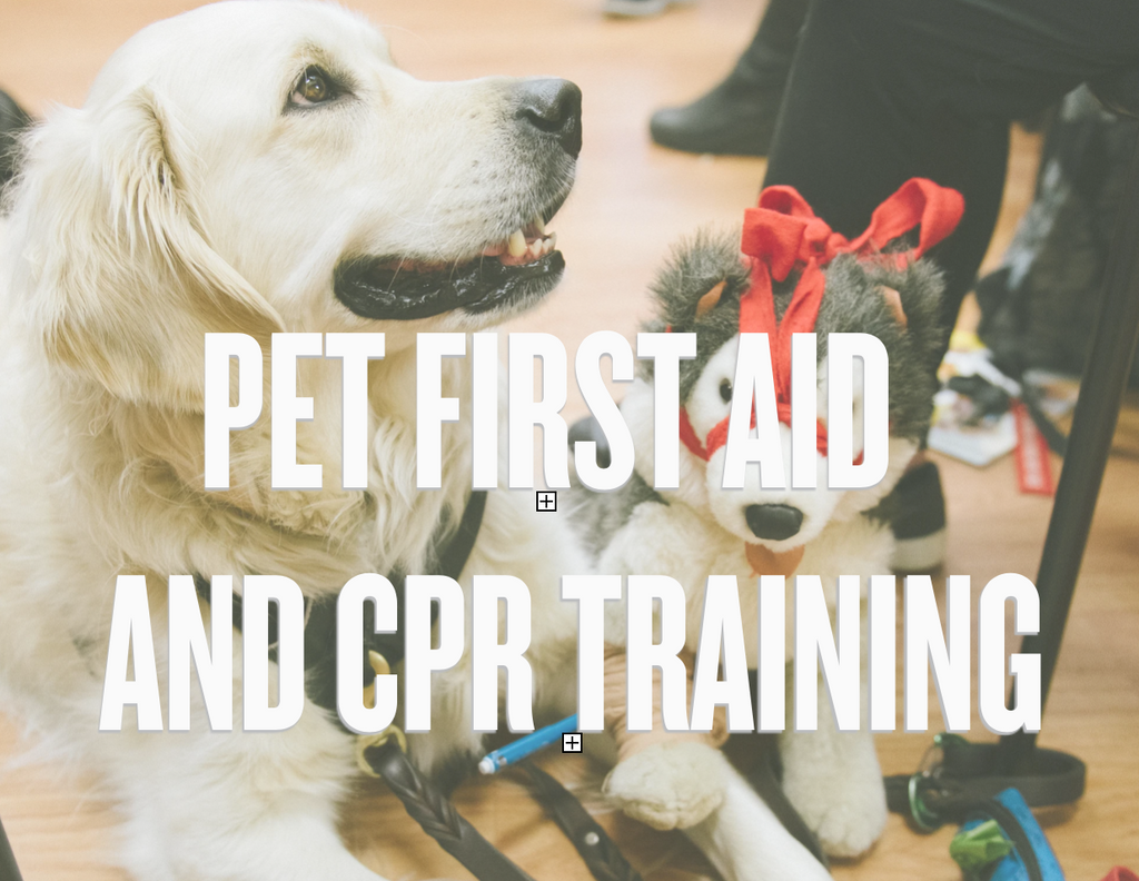 Pet First Aid and CPR Training