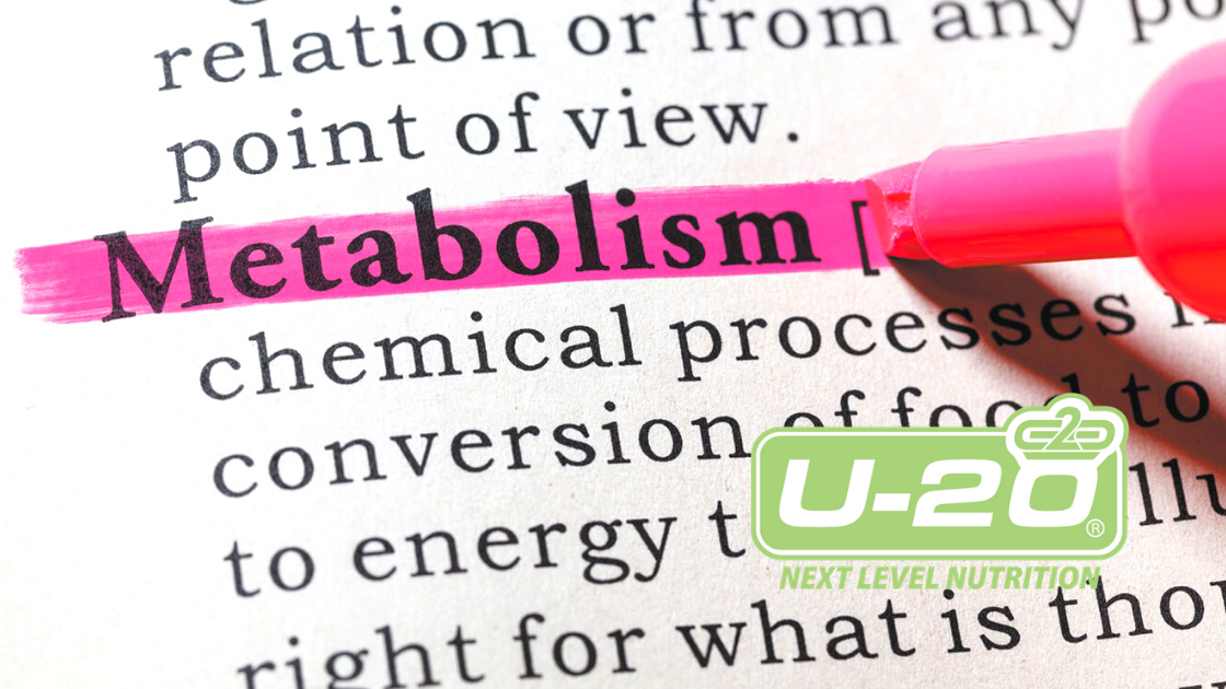 5 Foods that Are Good For Your Metabolism