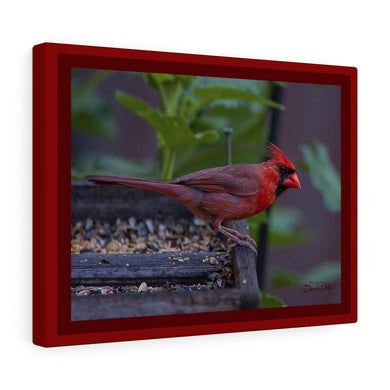 Beautiful Cardinal Canvas Gallery Wraps