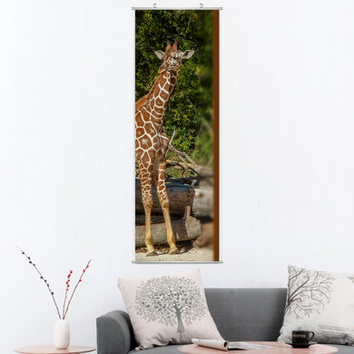 Giraffe Beauty