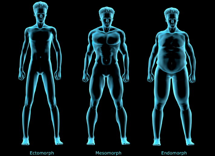 Body composition somatotypes for sports nutrition