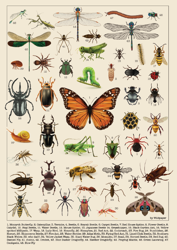 Creepy Crawlies & Winged Wonders  - Non Tearable Poster