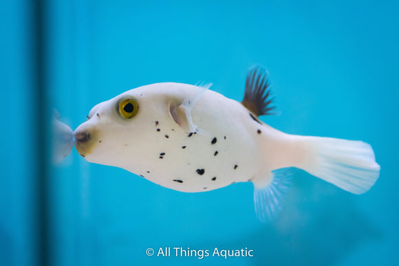 We are open at All Things Aquatic