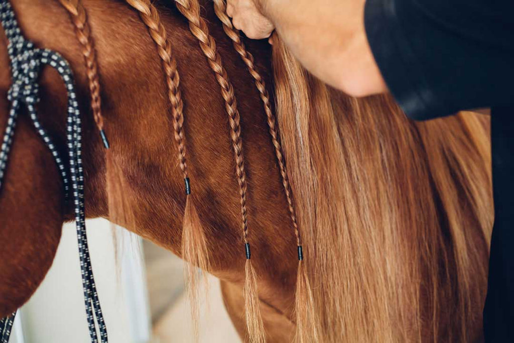 9 Valuable Tips For Braiding And Saving Your Horse S Mane Biomane Com
