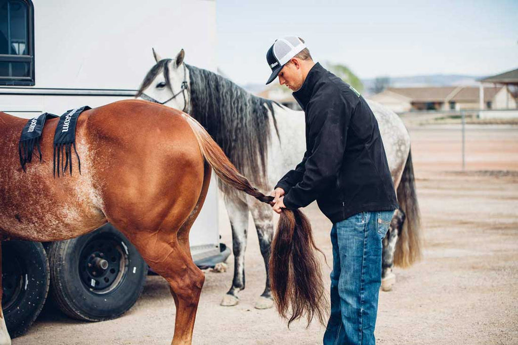 8 Tips For Properly Braiding Your Horse's Tail