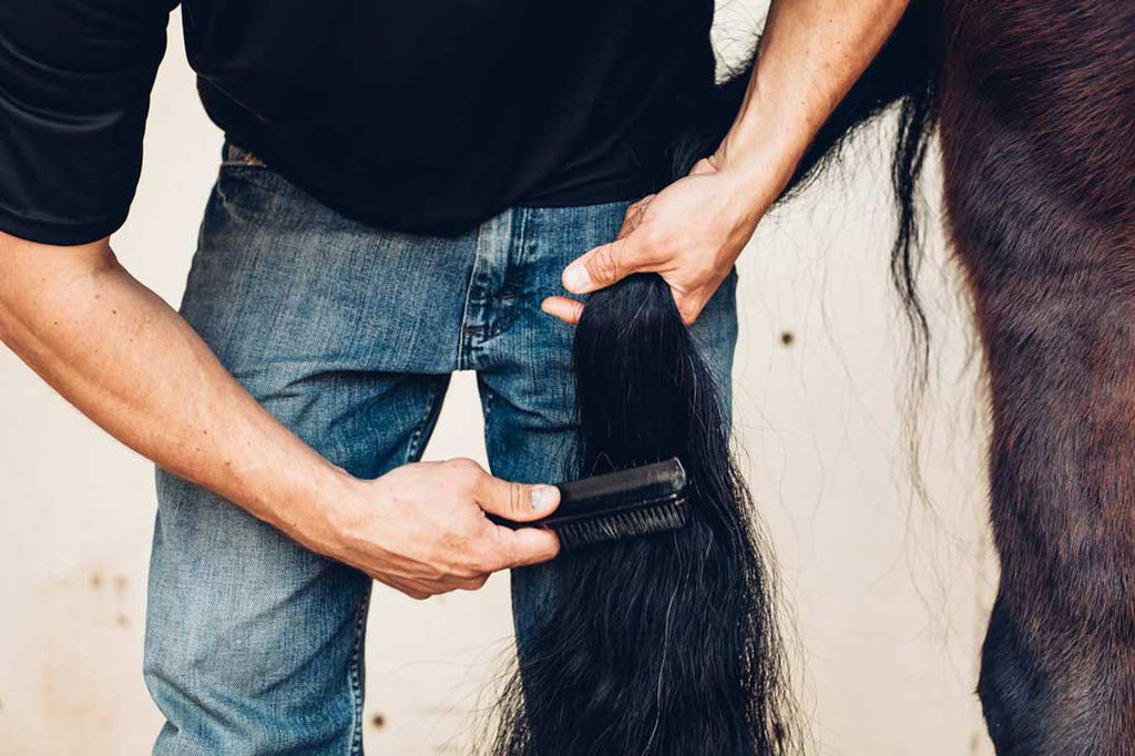 How To Properly Brush Your Horse's Tail