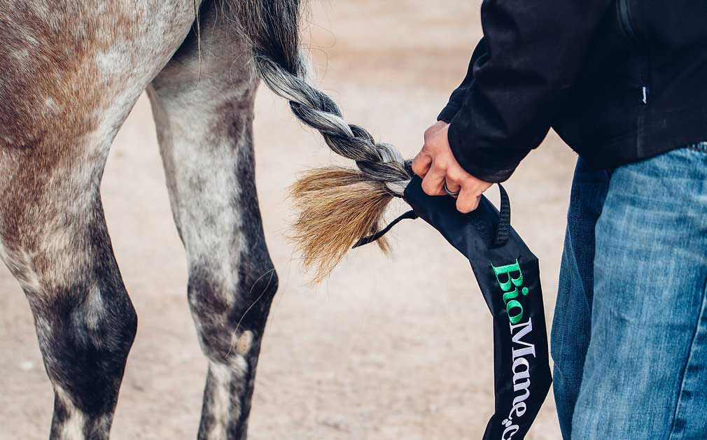 5 Quick Tips For Conditioning Your Horse's Tail