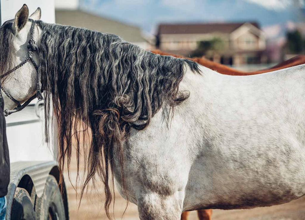 How to Properly Work Through Knots In The Mane