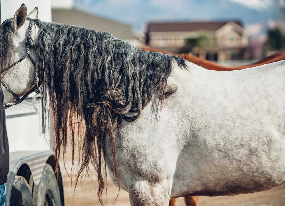 How to Protect Manes and Tails During the Winter