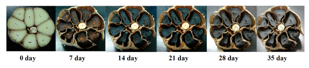 Black Garlic Aging Source