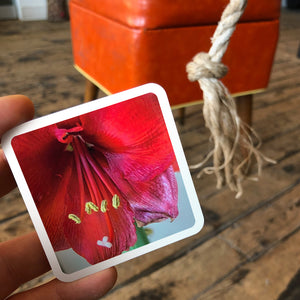 OuiSi photo card with a picture of a red flower that matches the color of an ottoman in the background.