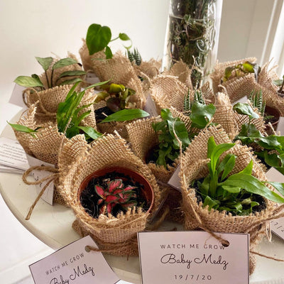 Did you know we offer plant gifts for events?