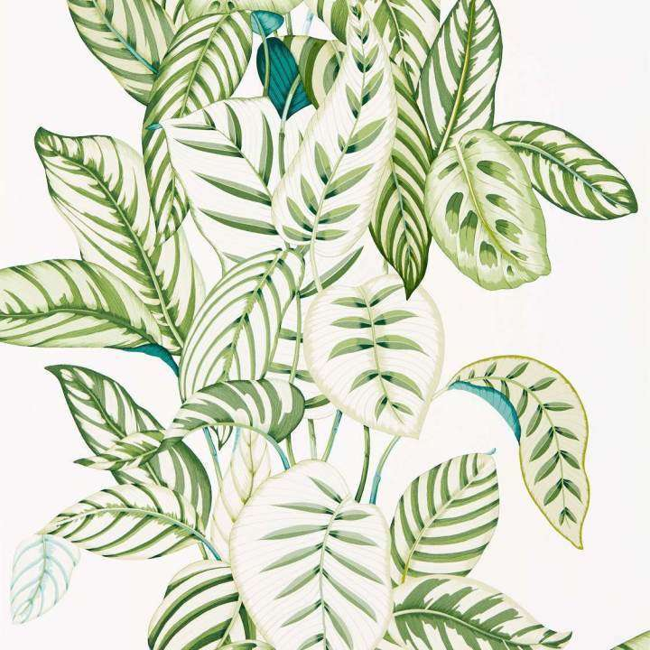 Calathea Green behang Sanderson Selected wallpapers by OOSTENDORP