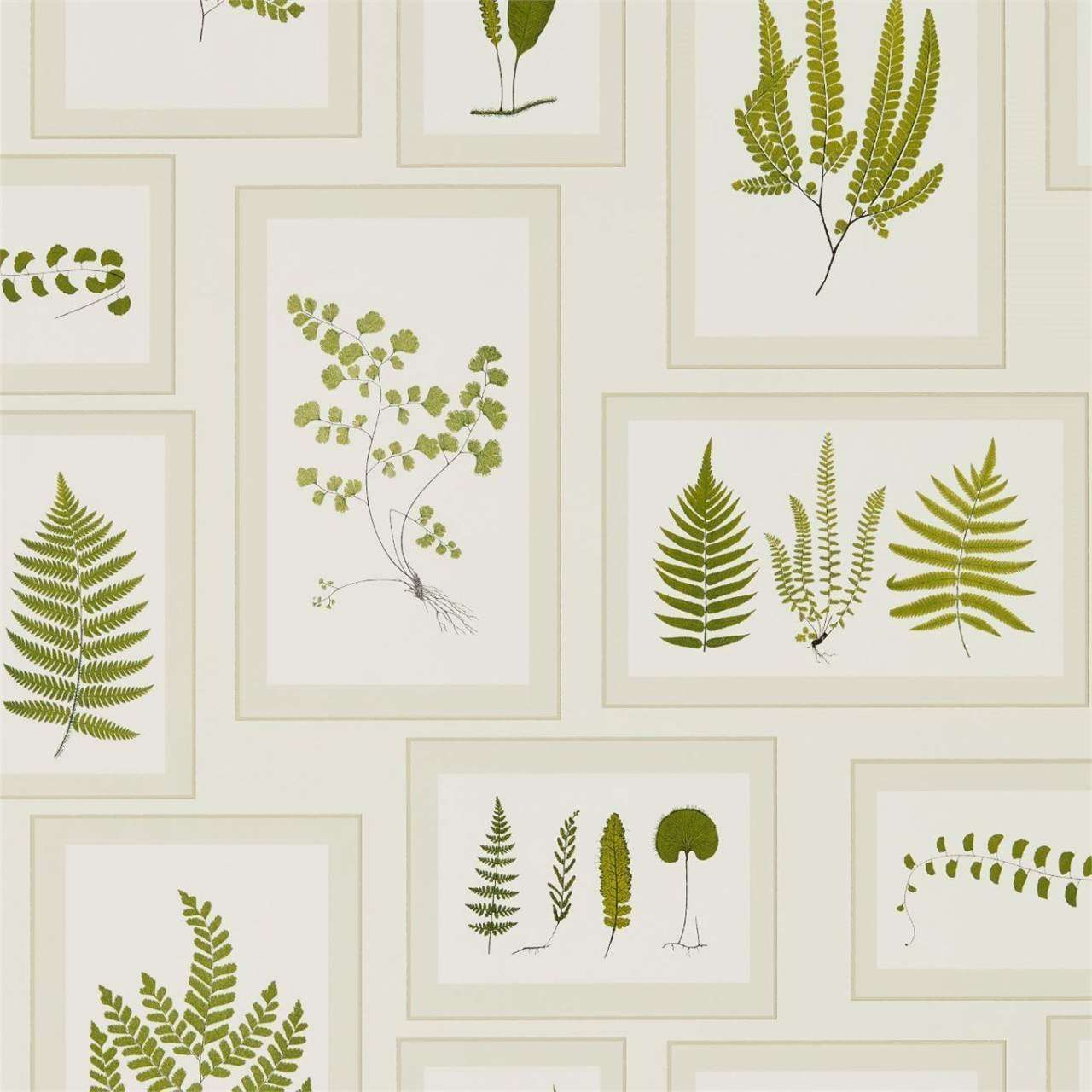 Fern Gallery Ivory/Green behang Sanderson Selected wallpapers by OOSTENDORP