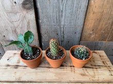 Load image into Gallery viewer, Cacti (all sizes)