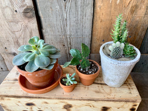 Cacti (all sizes)