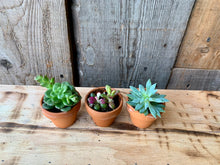 Load image into Gallery viewer, Succulents (all sizes)