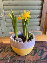 Load image into Gallery viewer, Spring daffodils