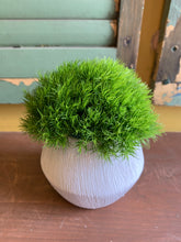 Load image into Gallery viewer, Moss ball