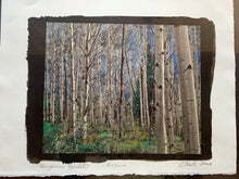 "Load image into Gallery viewer, ""Aspens"""