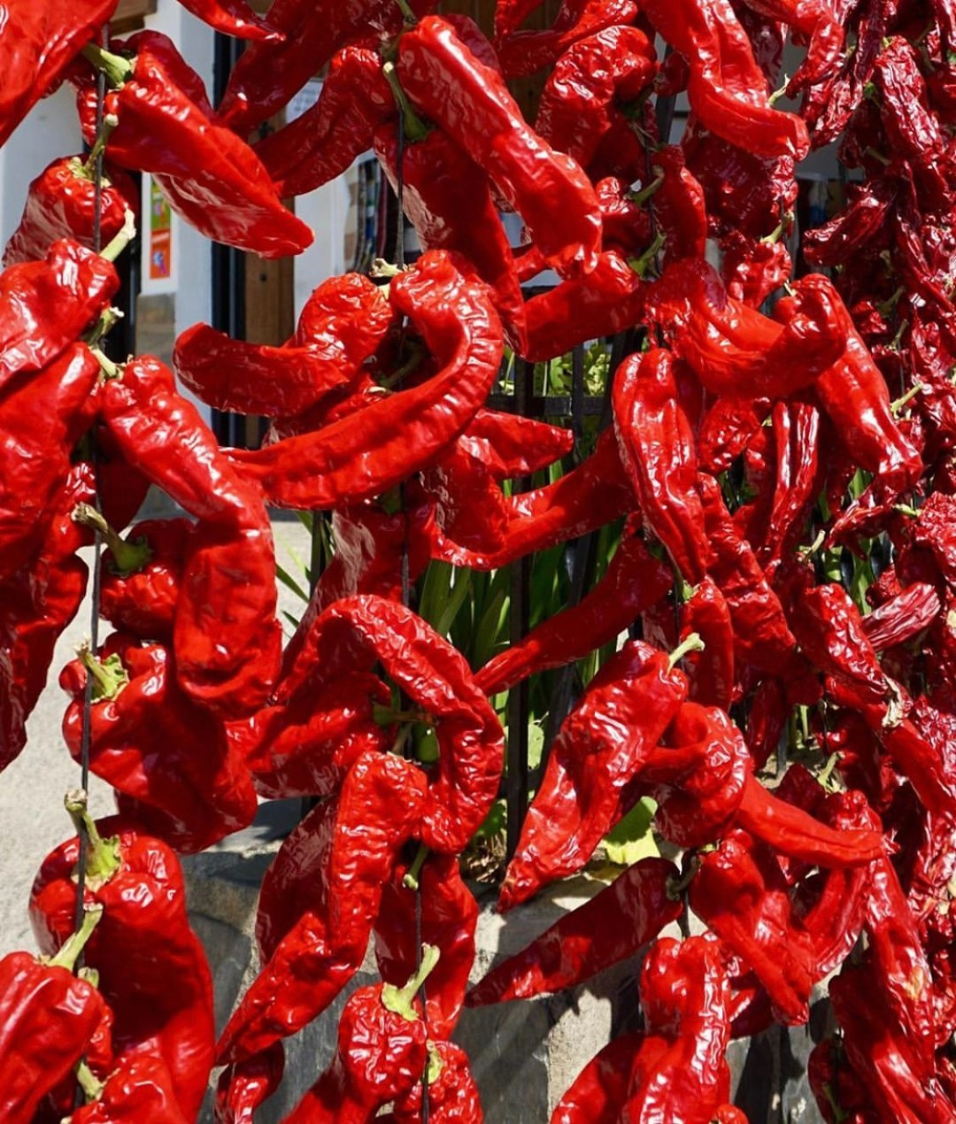 Hot peppers grown in Sierra Nevada, Andulusia, the origin of our pure natural mineral water