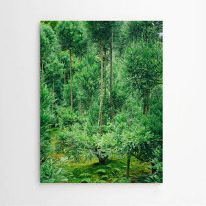 Mark Römisch. Shinrinyoku (Forest Bath) #6 / Fine Art Photography
