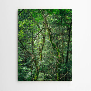 Mark Römisch. Shinrin-Yoku (Forest Bath) #8 / Fine Art Photography