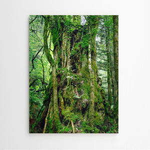 Mark Römisch. Shinrinyoku (Forest Bath) #9 / Fine Art Photography