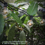 Decorative String Lights - Rising Vegans
