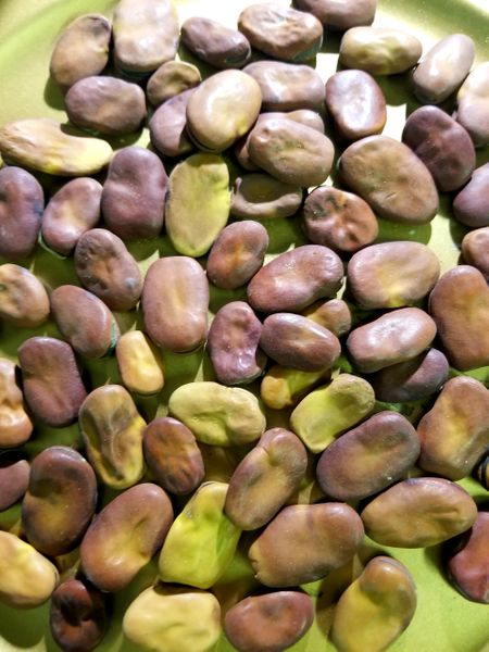 Mojo Beans African Wishing Beans