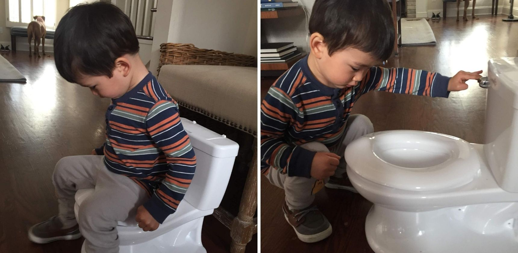 Boy Inspecting Potty Chair