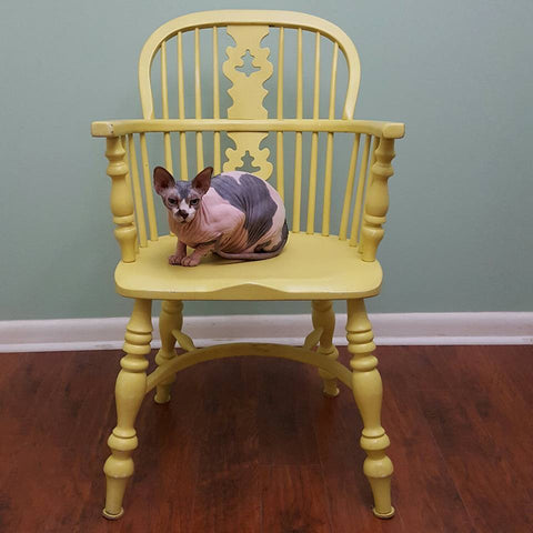 sphynx cat on yellow chair