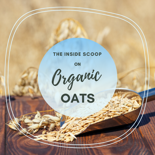 The Inside Scoop on Organic Oats