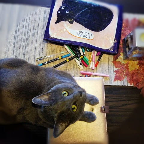 big grey cat with green eyes, laying on a rose gold Happy Planner binder, looking up at camera. Pencil bag that says I do what I want, featuring a black cat with navy and pink color background and has writing supplies spilling out. Cat, bag and supplies all sit on a dark wood kitchen table.