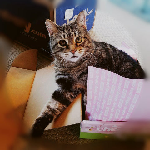 short haired main coon cat sitting in a cardboard box with pink tissue paper, looking at camera.
