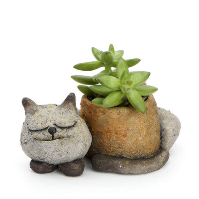 Sleeping Kitty Cat Desktop Planter - Funky Cat Emporium