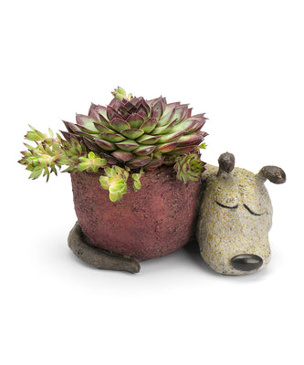 Dreamer the Dog Desktop Planter - Funky Cat Emporium