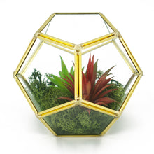 Load image into Gallery viewer, Geometric Pentagon Artificial Arrangement Terrarium Vase (14.5cm)