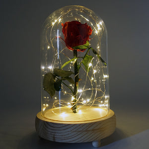 Real Preserved Forever Enchanted Red Rose