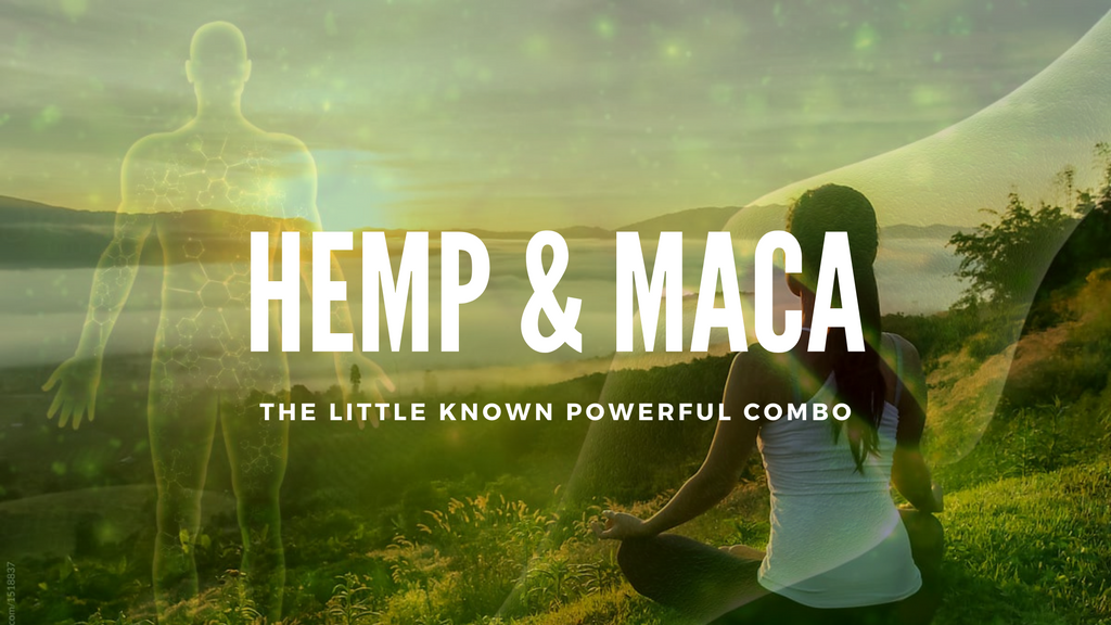 The Little Known Yet Powerful Synergy of Hemp and Maca