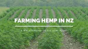 farming hemp in nz
