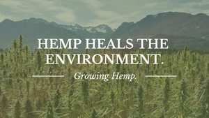 growing hemp in new zealand laws