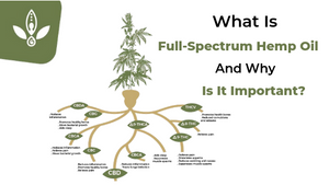 What is Full Spectrum Hemp Oil & What Does It Do