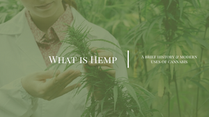 what is hemp oil seed in nz