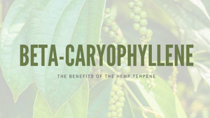 The Benefits of Beta-Caryophyllene