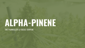alpha pinene terpene hemp