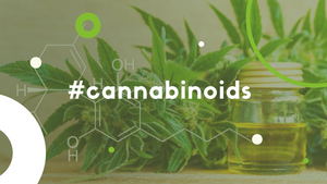 how many cannabinoids in hemp