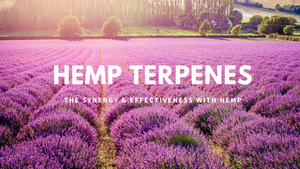 what are hemp terpenes