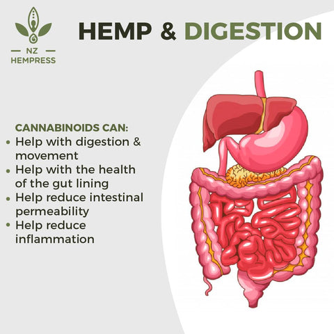 hemp oil for digestion nz